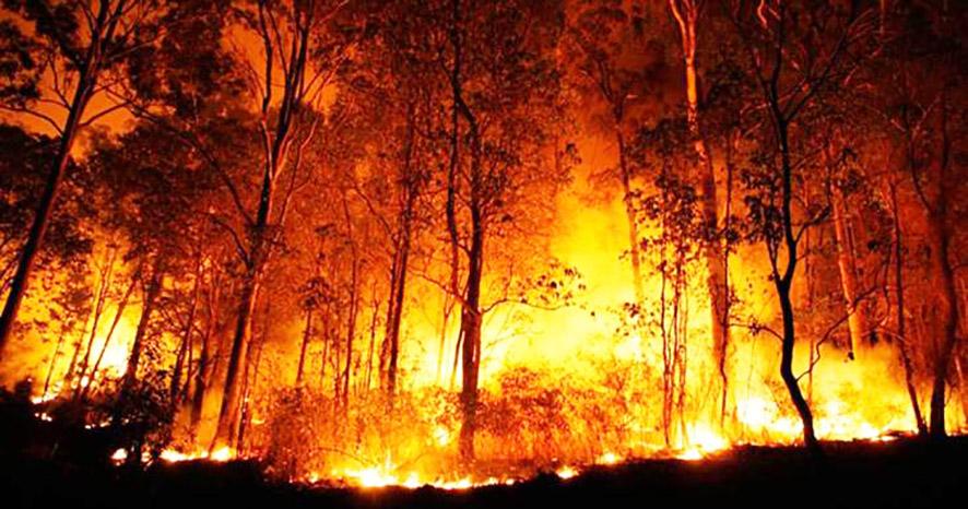 Read more about the article Problemas respiratórios