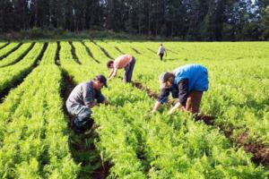 Helder estuda rever indicações e recolocar Emater a serviço do trabalhador do campo