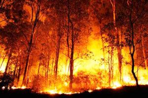 Pará prevê zerar emissão de gases de efeito estufa até 2036, diz secretário